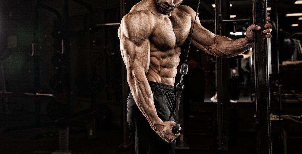 Comment les muscles libèrent de l'énergie – Ce que vous devez savoir